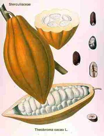 Copia di cacao4